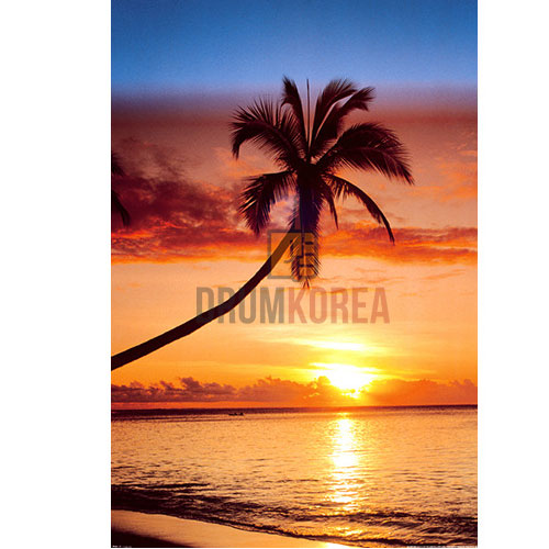 Sunset & Palm Tree 포스터