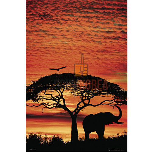 [드럼코리아 1599-3867] Africa Sunset - Elephant 포스터 (PH0279)